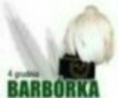 Barbórka